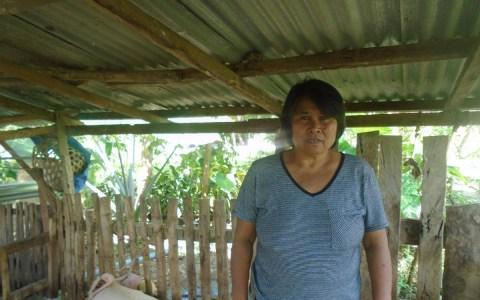 photo of Ponciana