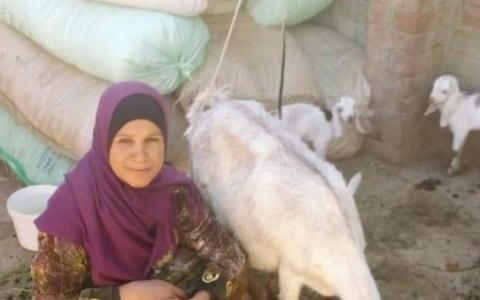 photo of Nemaa
