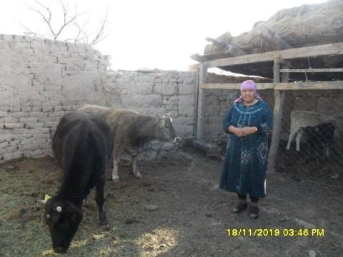 photo of Kulay