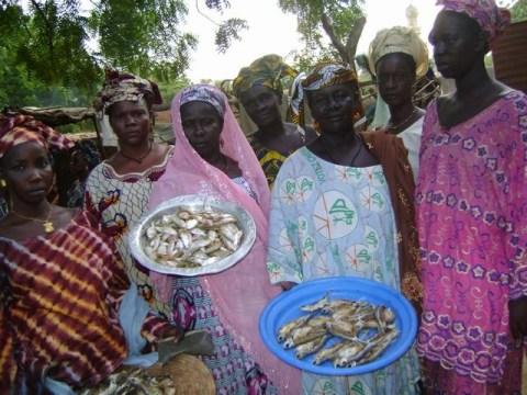 photo of Dembagnouman Group
