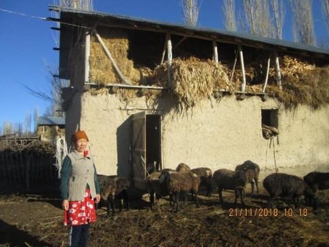 photo of Dinavar