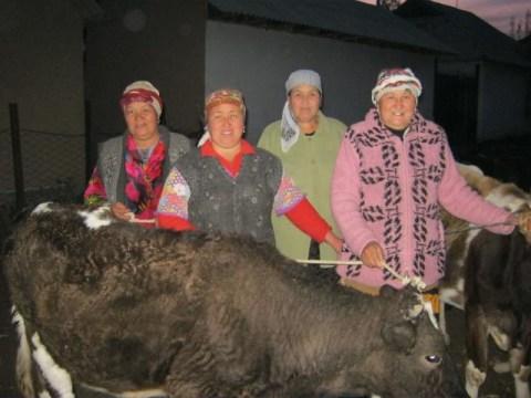 photo of Basharat's Group