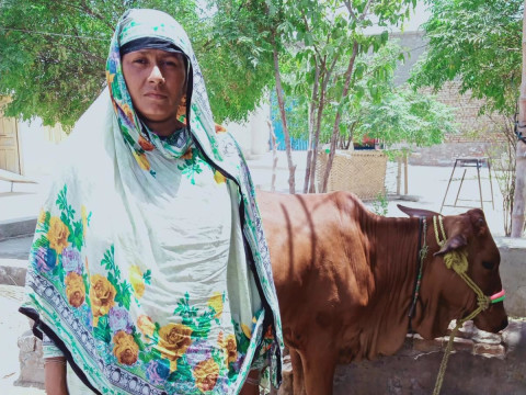 photo of Gamai