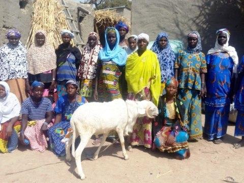 photo of Jekafo Group