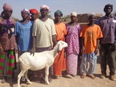 photo of Cessiri N°1 Group