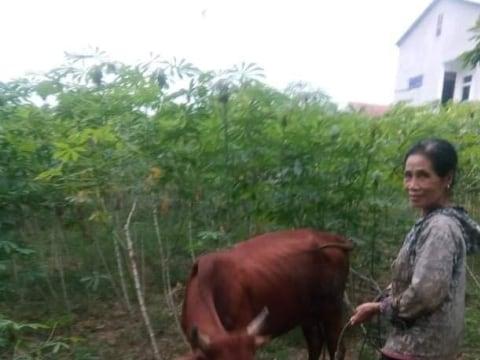 photo of Vuong