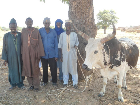 photo of Benkadi Gs Group