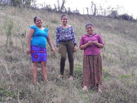 photo of El Buen Camino Group
