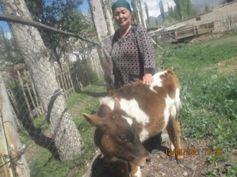 photo of Uulbubu