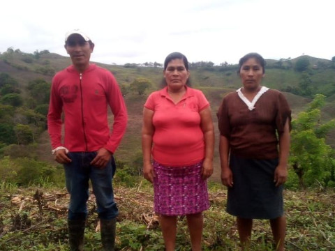 photo of Los Lirios- Manchones Group