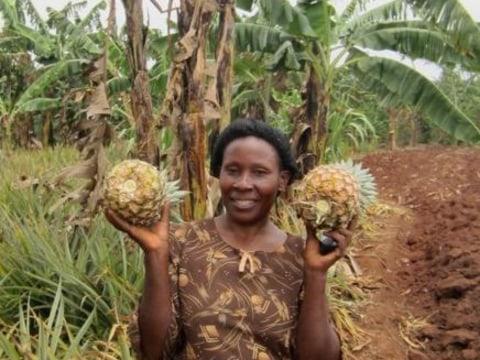 photo of Mavuno Harvest