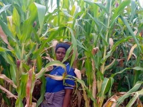 photo of Mujawimpundu