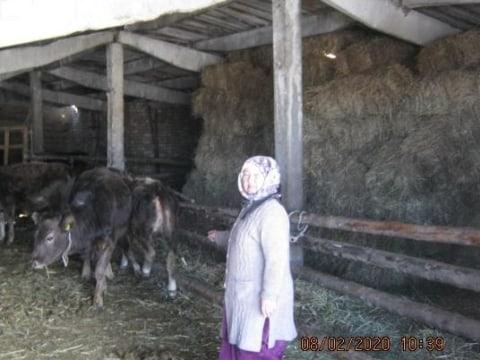 photo of Dzhanylkan