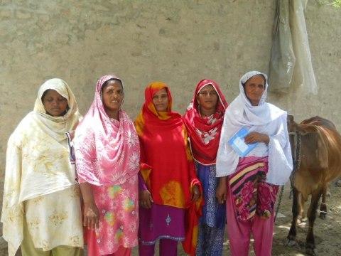 photo of Sarafeen's Group