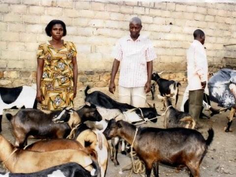 photo of Uchuuzi Mbuzi Group