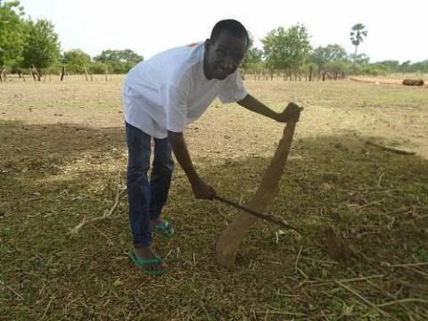 photo of Mamadou Diao