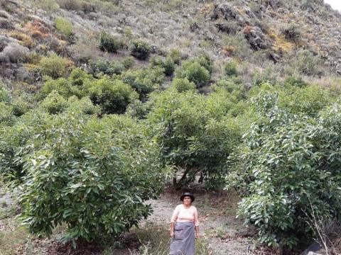 photo of Vilma