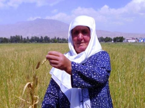 photo of Arusbi