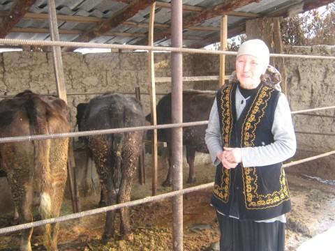 photo of Asyldjan