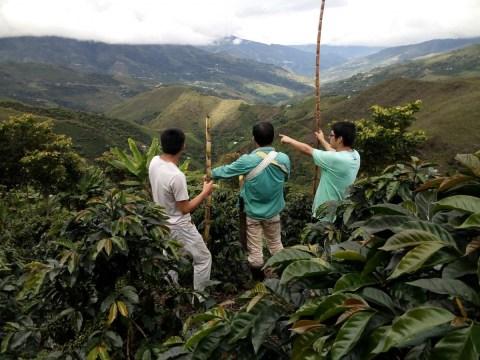 photo of Norcafé Peru
