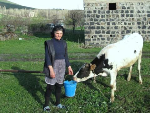 photo of Bavakan