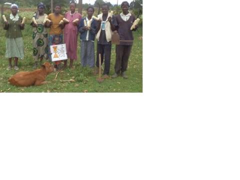 photo of Niinue Group