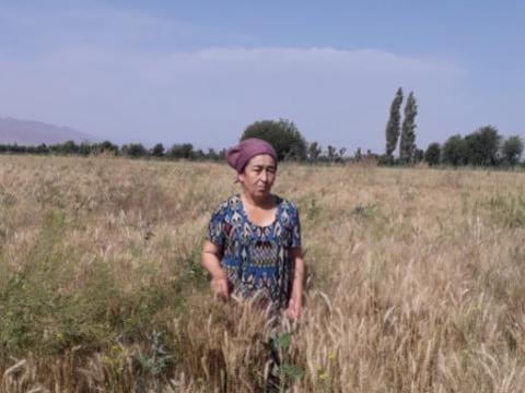 photo of Homida