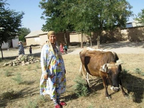 photo of Simbat