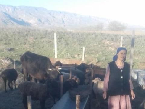 photo of Momajon