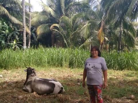 photo of Precila