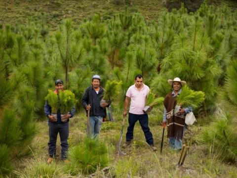 photo of Flor De Pinavete Group