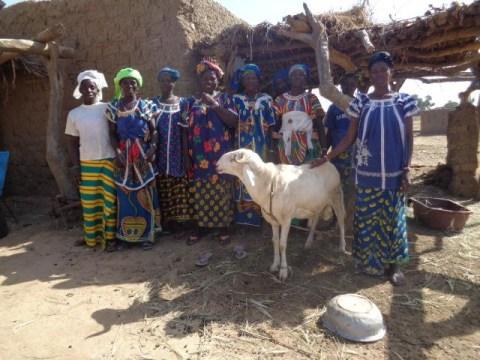 photo of Amapiri Group
