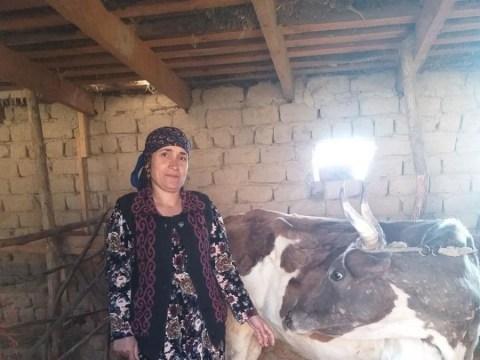 photo of Malikahon