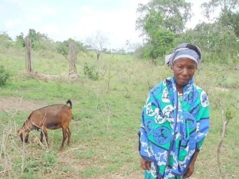 photo of Mupa