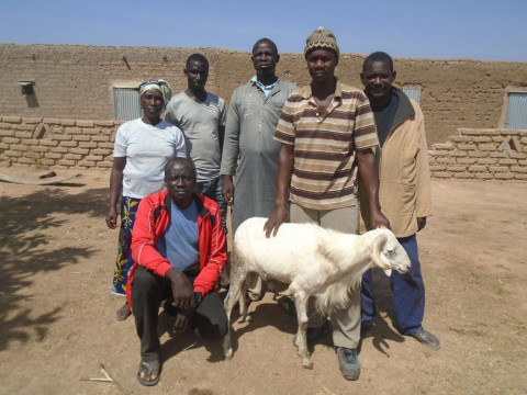photo of Kafo Group