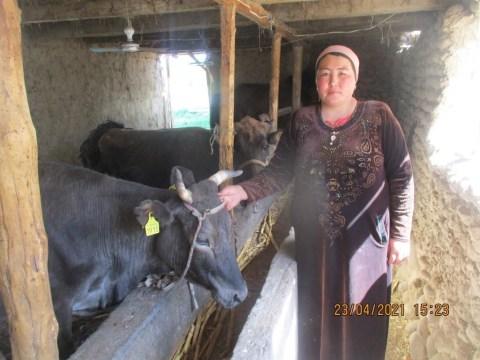 photo of Tolkunai