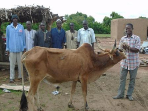 photo of Kotognogotala Ii Group