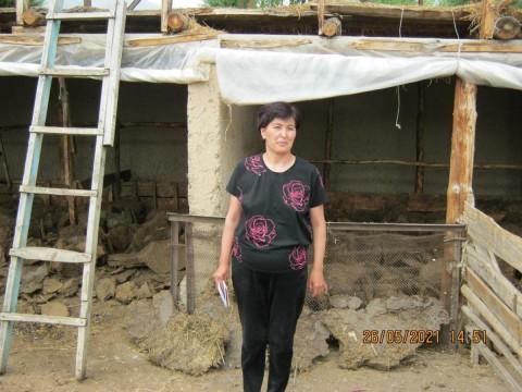 photo of Gulbarchyn