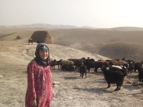 photo of Bybyhanyfa