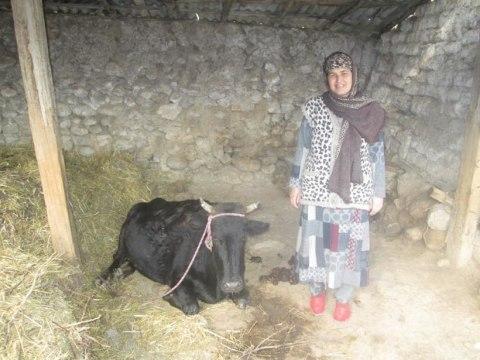 photo of Mamlakat