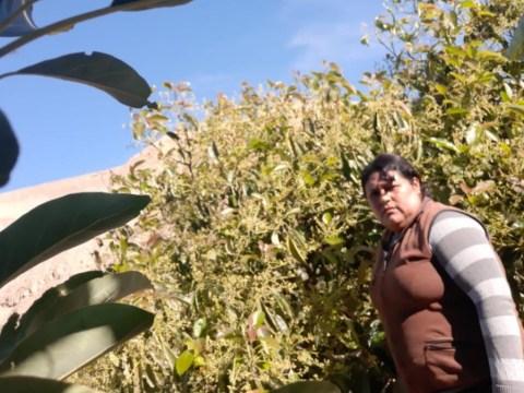 photo of Juana Anabel