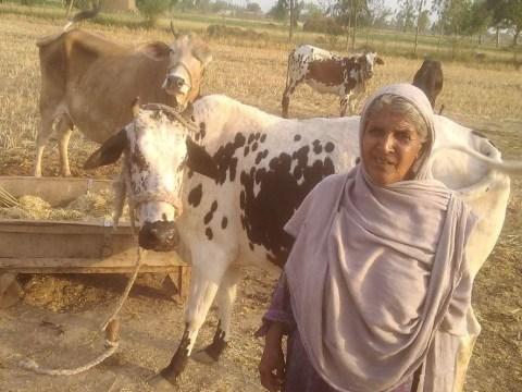 photo of Dilshaad