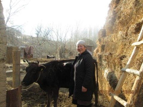 photo of Gulburak