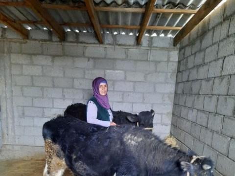 photo of Holbibi