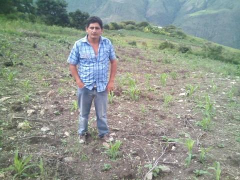 photo of Enemecio