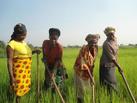 photo of Wamama Wakulima Group