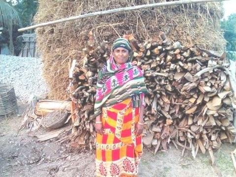photo of Bulbuli