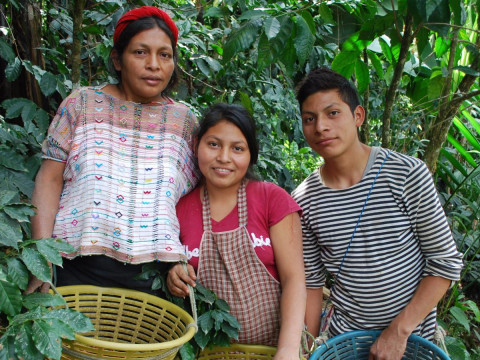 photo of Exportadora De Café Especial De Guatemala
