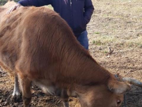 photo of Alamurod