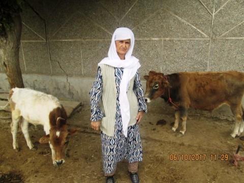 photo of Megilikhol